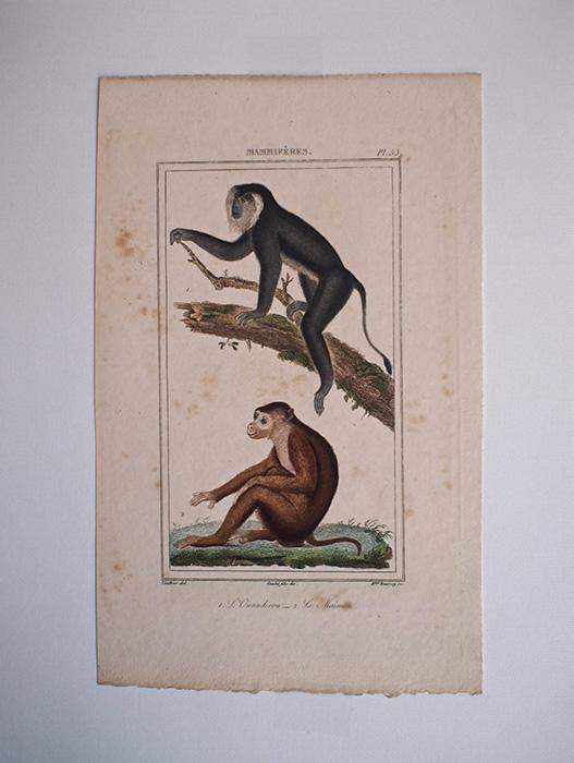 猿の博物画 9