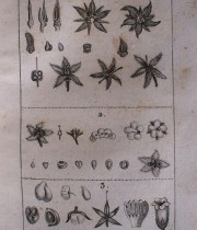 Buffon Histoire Naturelle botanique tome IX
