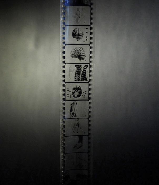 SCIENCES L'HOMME Film