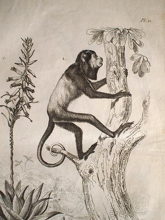 Dcitionnaire pittoresque d'histoire naturelle et des phénomènes de la nature I