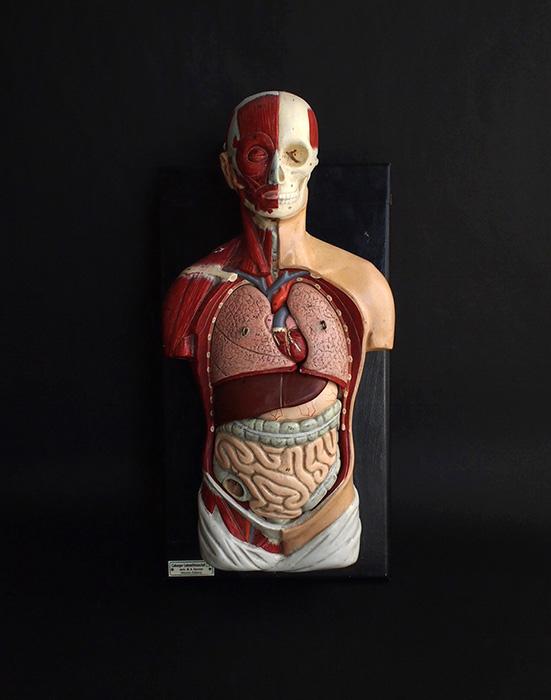 人体解剖模型 Tout le corps