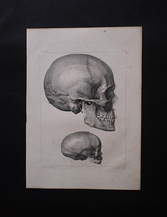 Frontispice du Traité complet de l'anatomie humaine 人体解剖図 頭蓋骨