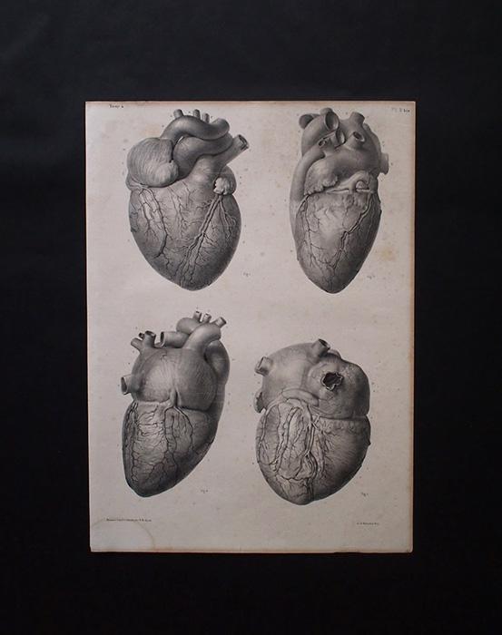 Frontispice du Traité complet de l'anatomie humaine 人体解剖図 心臓