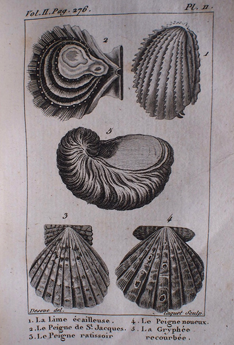 Buffon Histoire Naturelle des Coquilles tome II