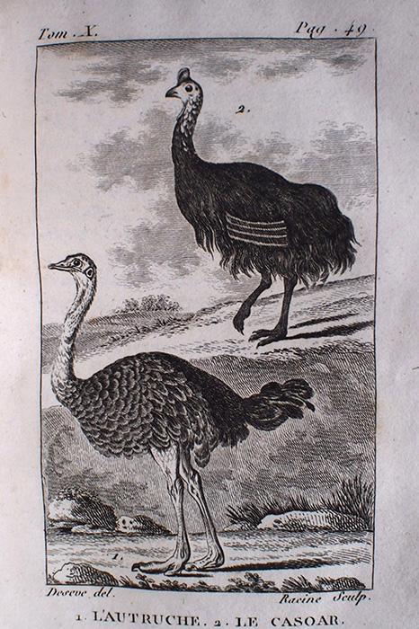 Buffon Histoire Naturelle des Oiseaux tome XX