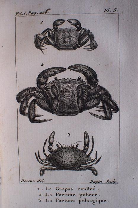 Buffon Histoire Naturelle des Crustacés tome I