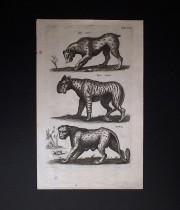 ヨンストンの図版 2 Feram