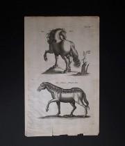 ヨンストンの図版 1 Equus