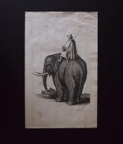 ヨンストンの図版 9 Elephant