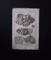 鉱物版画 Histoire Naturelle , Cristallisations 6