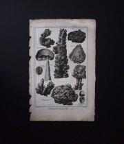 鉱物版画 Histoire Naturelle , Pierres