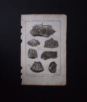 鉱物版画 Histoire Naturelle , Cristallisations métalliques 2