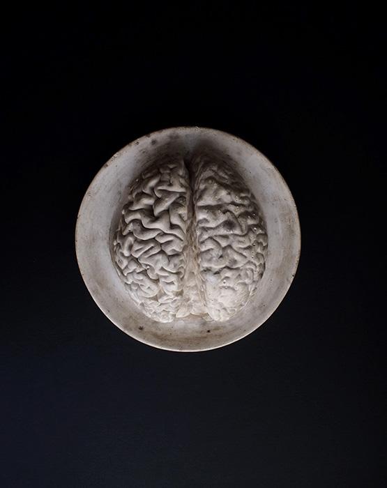 脳のデッサン模型