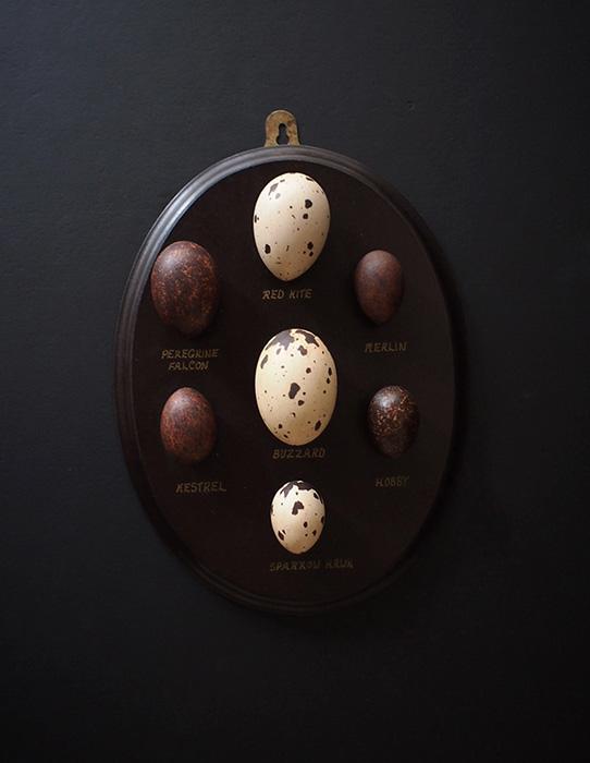 擬似卵コレクション 1