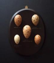 擬似卵コレクション 2