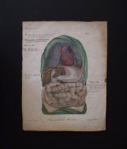 人体解剖図 Atlas du Nouveau Manuel d'Anatomie Descriptive et Raisonné