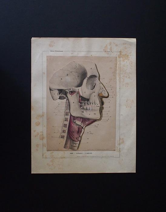 人体解剖図 Atlas d'anatomie de cuver
