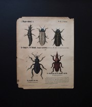 昆虫のポスター