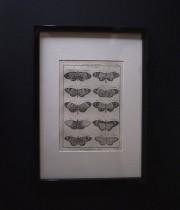蝶の銅版画 1 額装済み