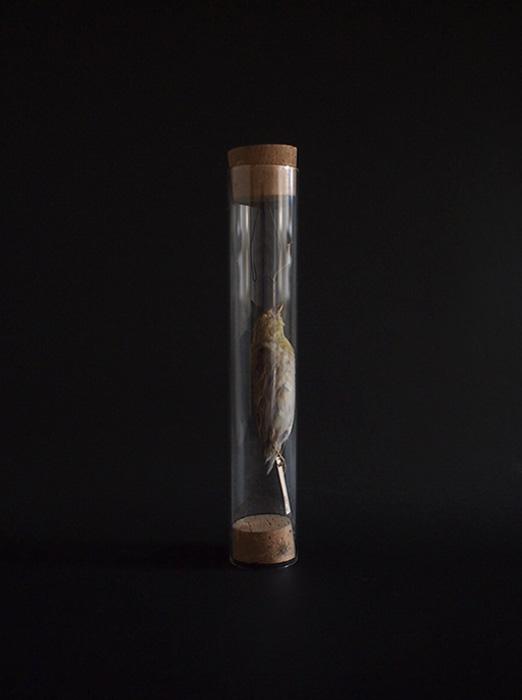 ガラスチューブ入り仮標本