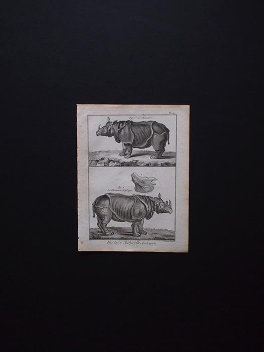 博物画 Rhinocéros 1