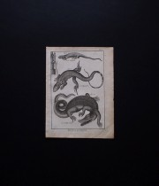 博物画 Reptiles 1