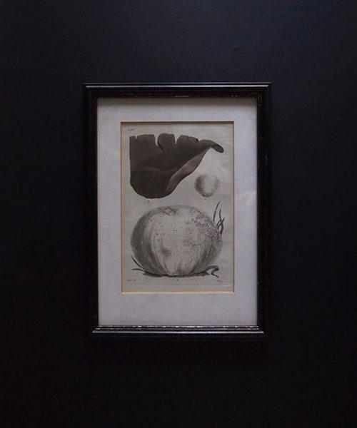 キノコの版画 28 額装品