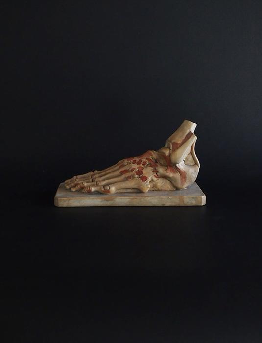 Modèle anatomique de la jambe