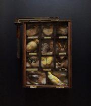 鳥と昆虫の標本箱