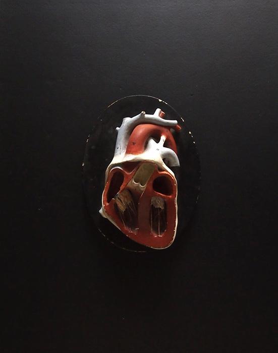 Modèle anatomique du cœur