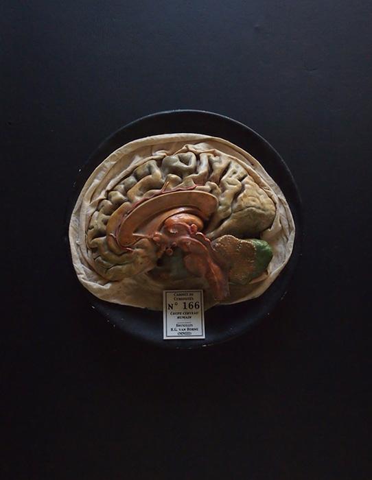Modèle du cerveau 3