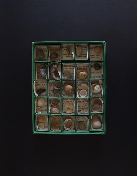 Collection de 25 LAMELLIBRANCHES