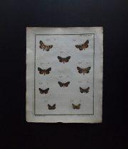 蝶類の版画  Les Papillons d'Europe peints d'après nature