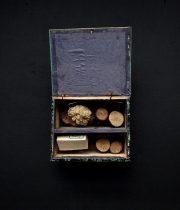 木製標本箱入り木の標本