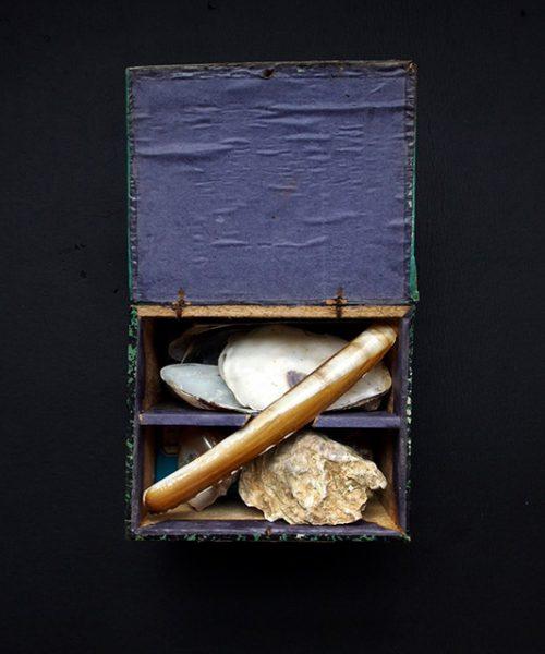 木製標本箱入り貝の標本
