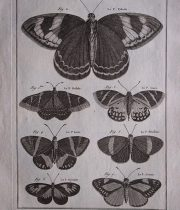 HISTOIRE NATURELLE , Insectes