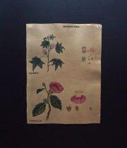 手描きの植物画