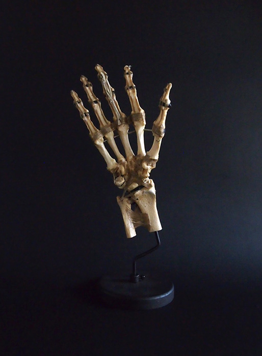 Spécimens de la main Skeletal