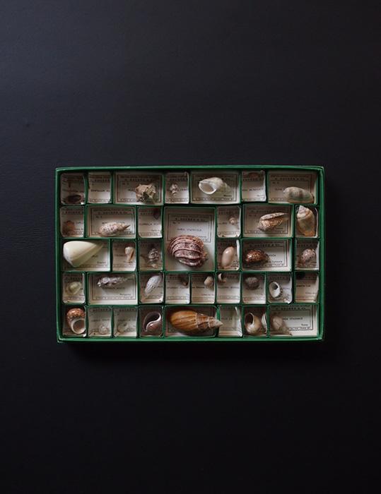 Collection Générale de 50 COQUILLES