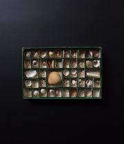 Collection de 300 FOSSILES CARACTÉRISTIQUES