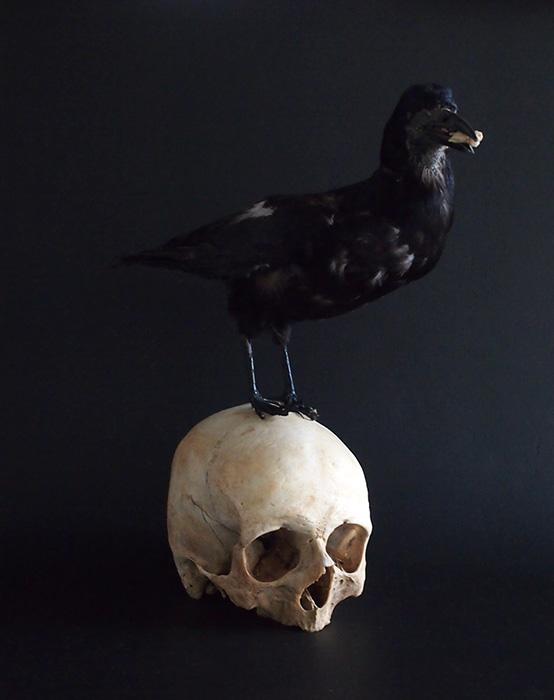 Crâne d'objets