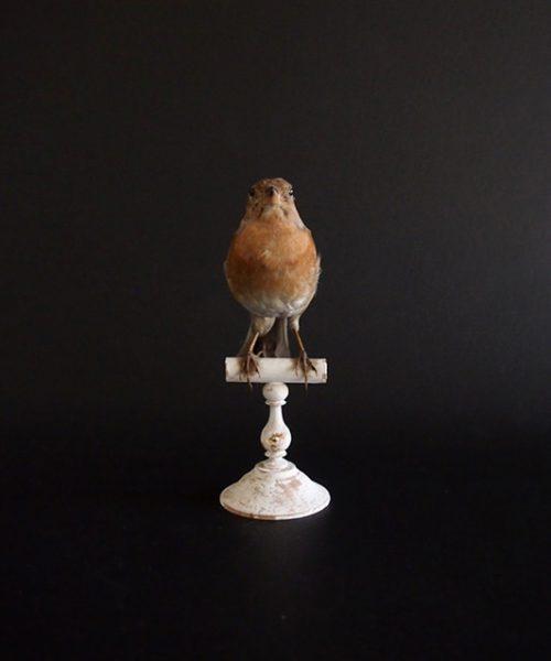 アンヴァンテール Hubert Masquefa collection 鳥の剥製 E