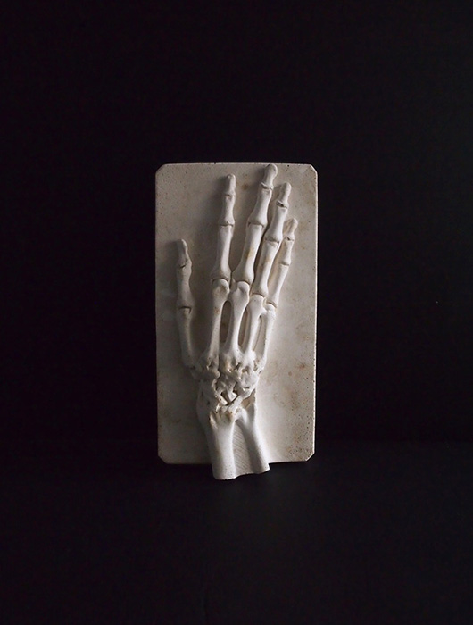 Modèle anatomique de la main 2