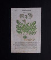 古い植物の木版画