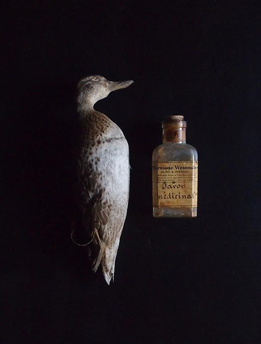 アンヴァンテール 仮標本と薬瓶