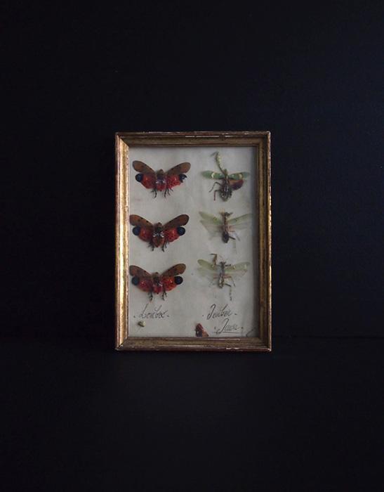 額装された虫の標本