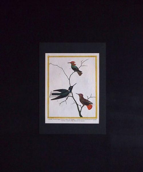 ビュフォンの鳥類史 A Oiseau Mouche