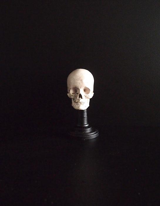 石膏の髑髏