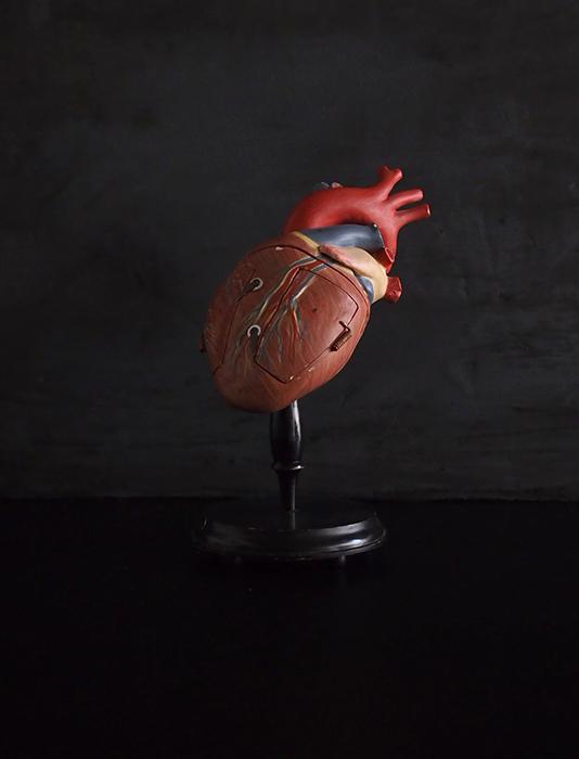 Modèle anatomique du cœur 4