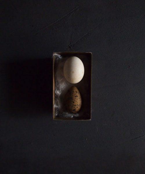 蝋引き標本箱入り卵の標本 4